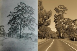 Historic Gumtree